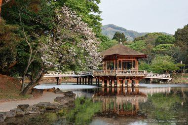 Chia sẻ kinh nghiệm thực tế về chương trình trao đổi ngắn hạn tại Nhật Bản