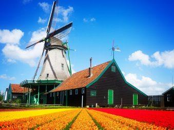 Học bổng Hoa Tulip Cam – 7 điều cần biết trước khi nộp đơn