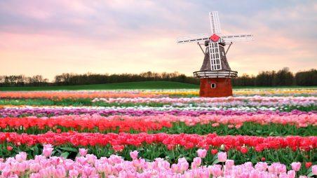 Săn học bổng trường Top Hà Lan cần chuẩn bị những gì?