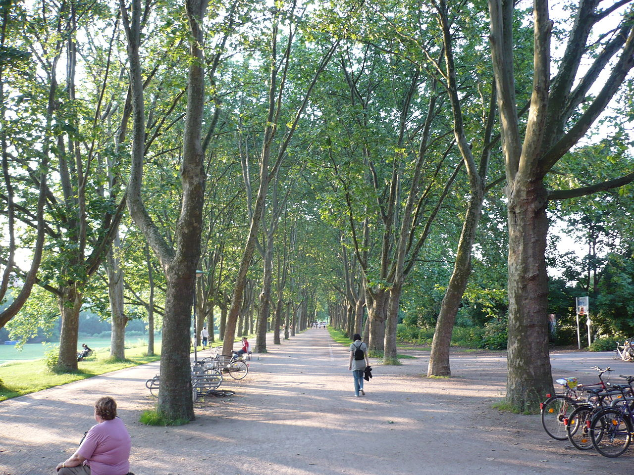 1280px-Alphons-Silbermann-Weg,_Köln,_Juni_2008