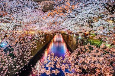 Học bổng nghiên cứu, Bậc Tiến sĩ, Tổ chức quốc tế Matsumae, Nhật Bản,2020
